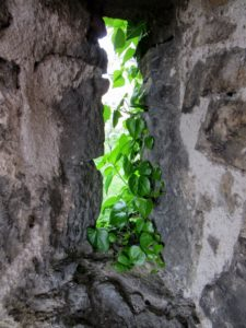 Leaves creeping into the window. | Walking Along the Wall of Rothenburg ob der Tauber.