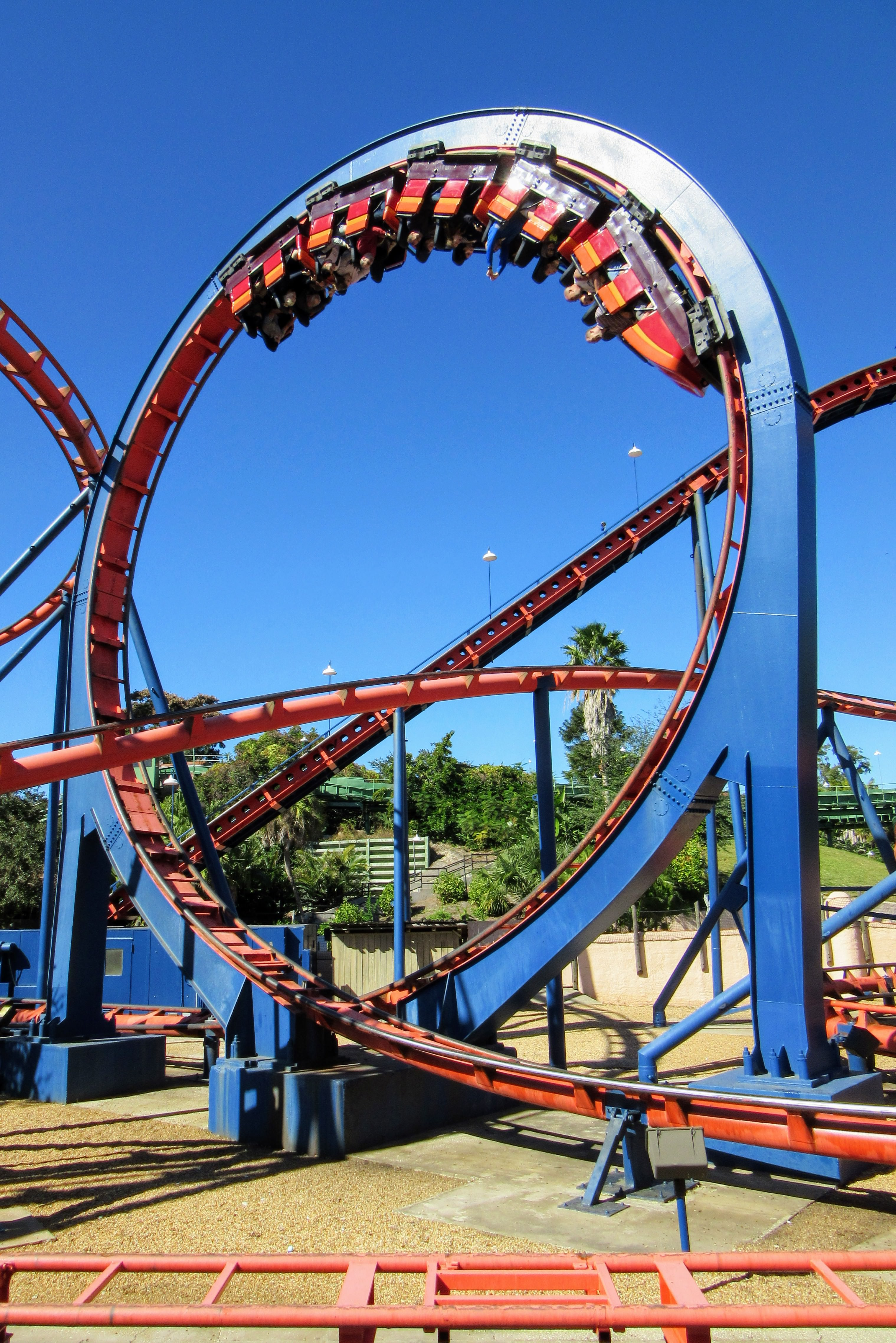 Visiting busch gardens tampa bay a review tips my - Busch gardens tampa roller coasters ...