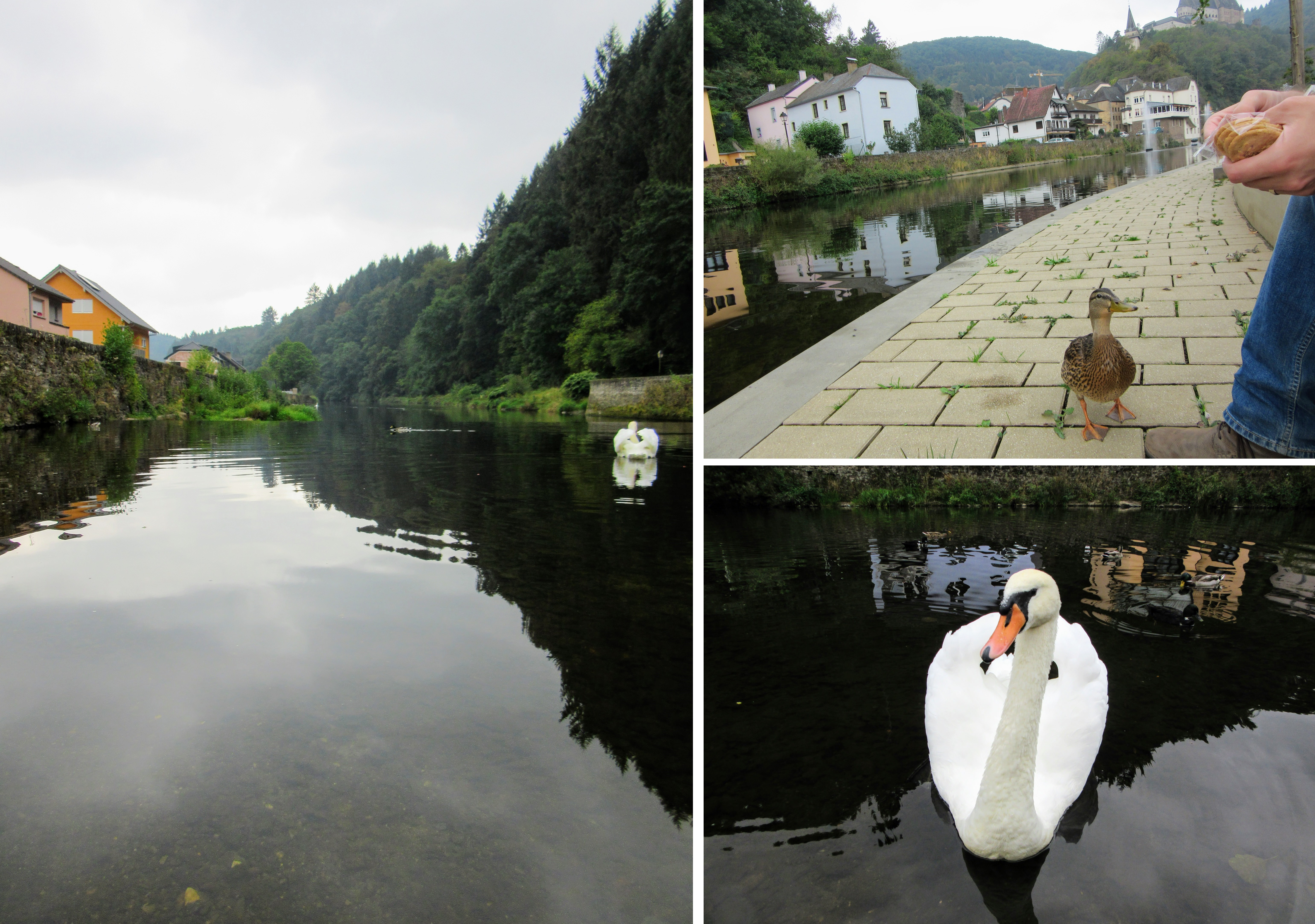 Wildlife in Vianden on the Our River.