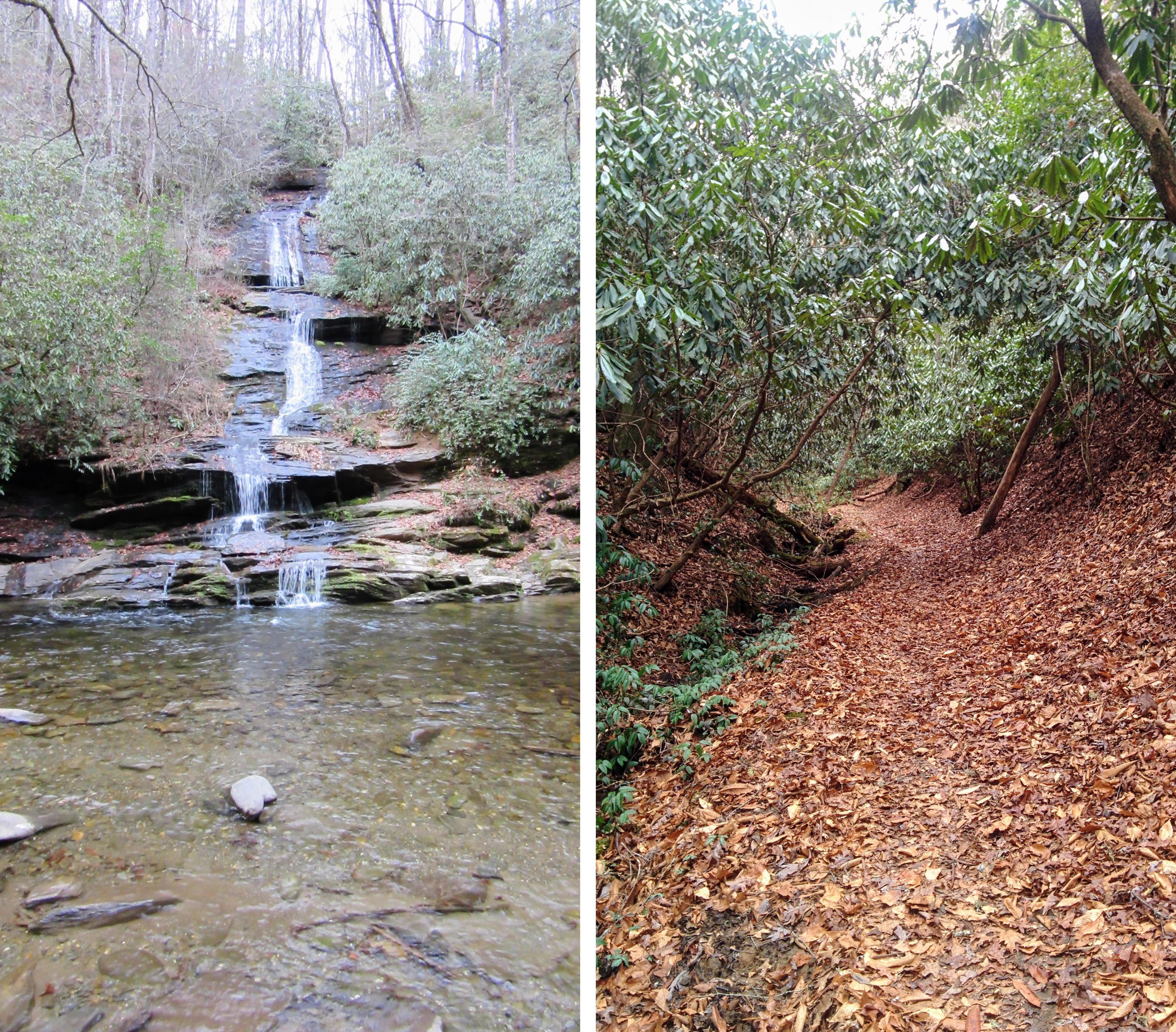 Hiking the Deep Creek Trailhead in the GSMNP.