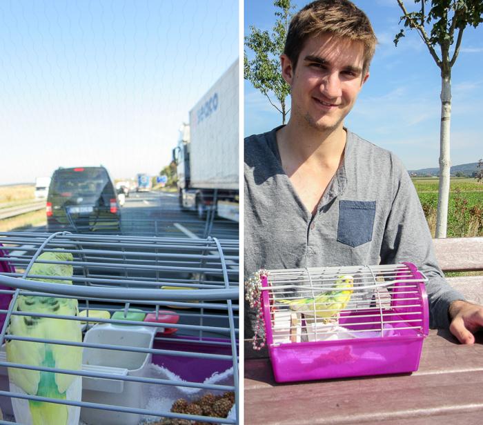 Koopa travels to Hamburg. | Koopa the Traveling Pet Budgie.