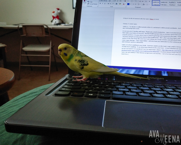 Working on the computer with my bird. | A Day in the Life with Lupus.